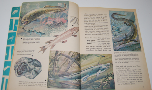 How & why book of fish 4