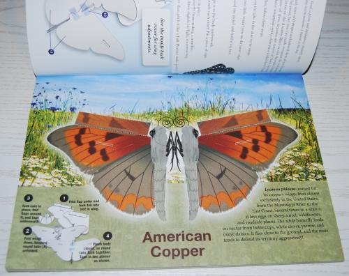 Beautiful pressout flying butterflies 1