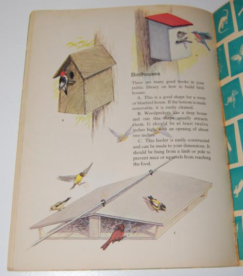 How & why birds