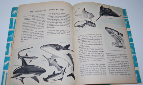 How & why book of fish 6