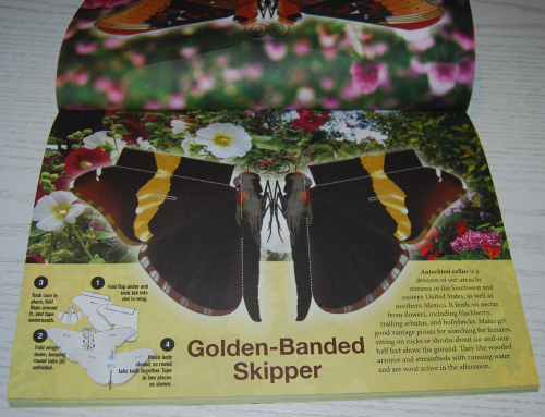 Beautiful pressout flying butterflies 5