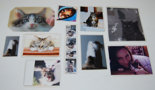 Bookmarks cats