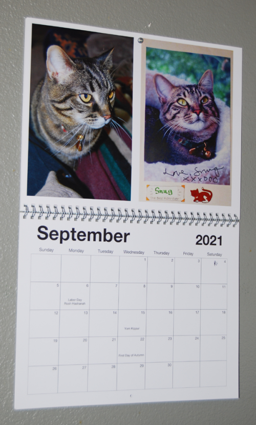 Sept kitties