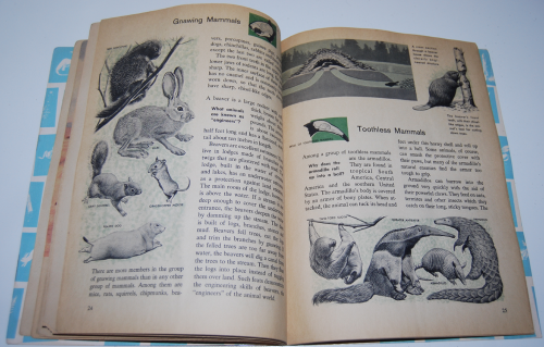 How & why book of wild animals 8