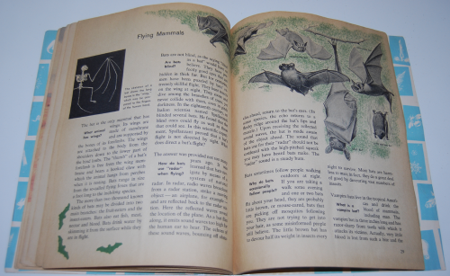 How & why book of wild animals 10