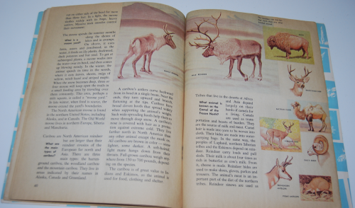How & why book of wild animals 12