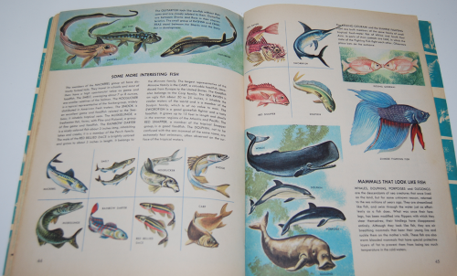How & why book of fish 9