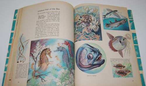How & why book of fish 8