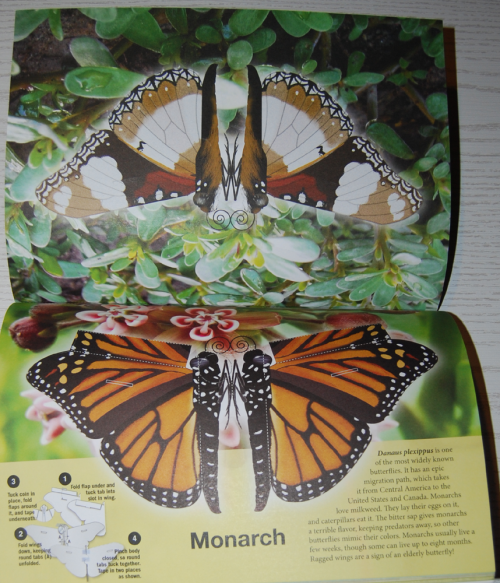 Beautiful pressout flying butterflies 6