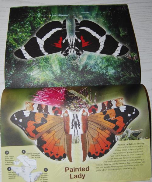 Beautiful pressout flying butterflies 8