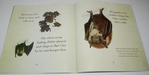 Bat loves the night 9