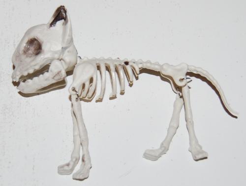 Halloween michaels cat skeleton 2021