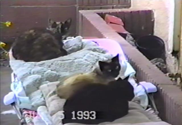 kitties of old