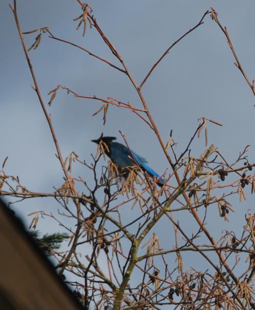 backyard birdies