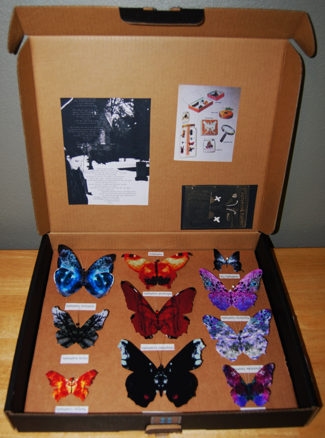 butterfly trials display box