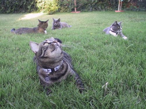my kitties...