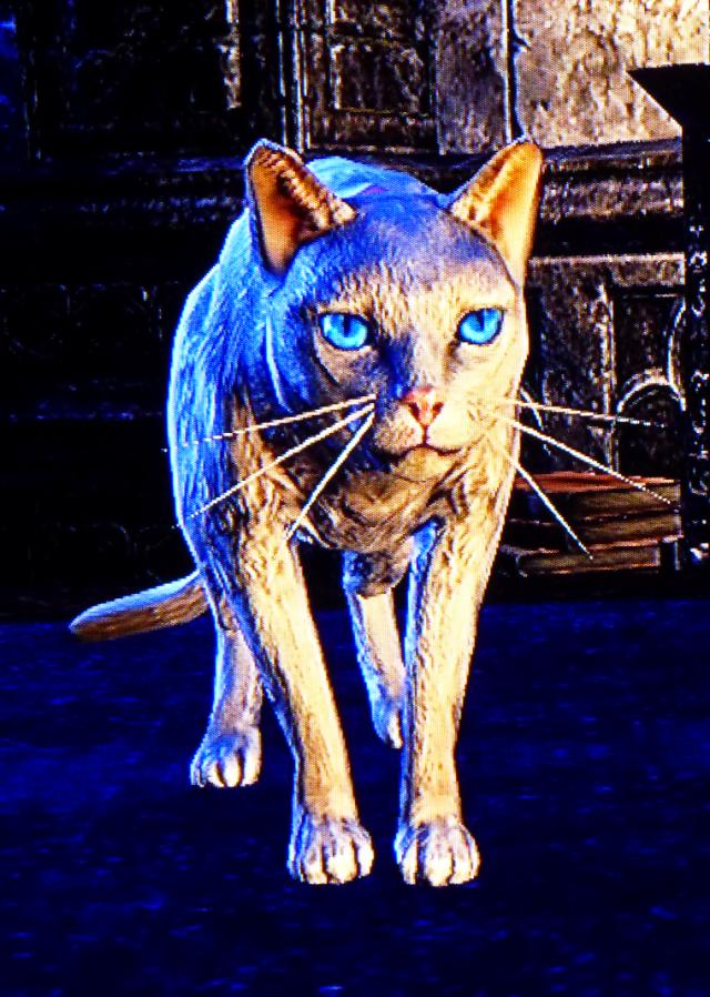 sabrina felina