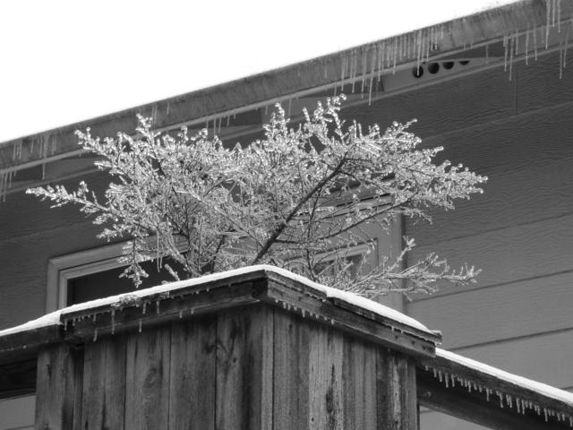 lilac ice