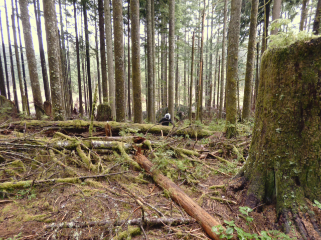 bigfoot hunting in the larch mountain corridor