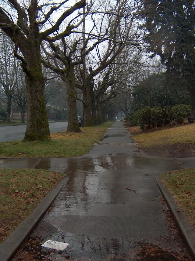 a rainy sidewalk..