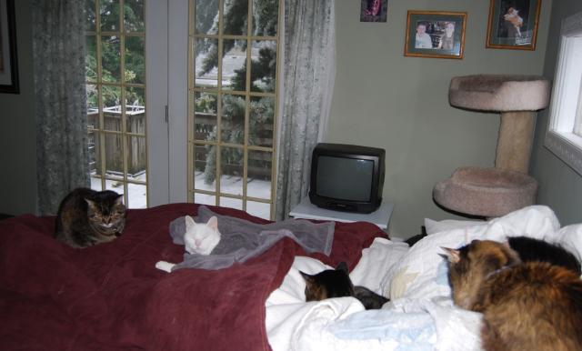 winter kitties