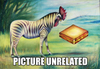 Zebra_rooster_and_a_cheese_sandwich_1